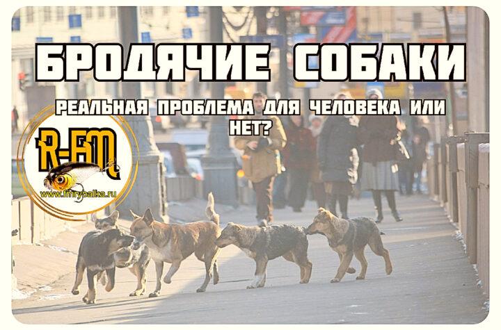 brodyachie-sobaki-realnaya-problema-dlya-cheloveka-ili-net-rybalka-fm