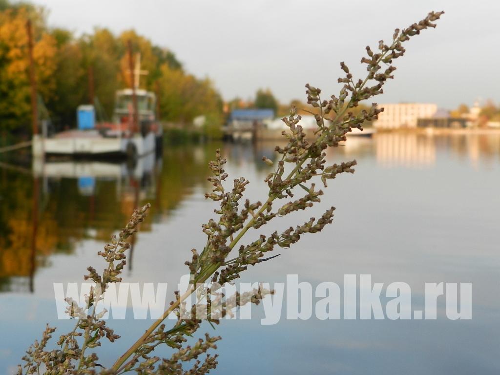 rybalka-na-klyazminskom-vodohranilische-www.fmrybalka.ru