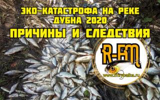 Эко-катастрофа на реке Дубна 2020 — причины и следствия